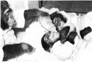 チンパン073