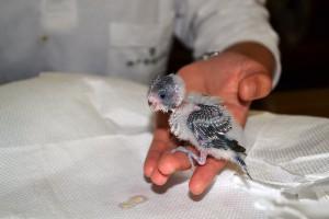 9月17日31さらに羽が生えてきました