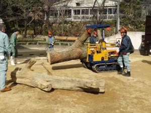 DSC06184新しい木が入る