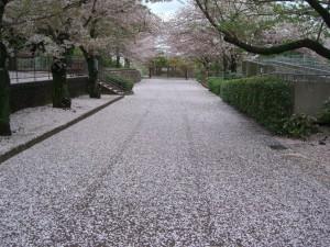 通路が絨毯2