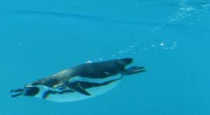 38水中飛行IMG_7514