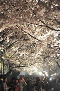 27年夜桜
