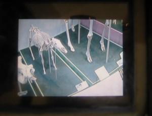 キリンの目0310