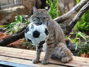 ソラとサッカーボール