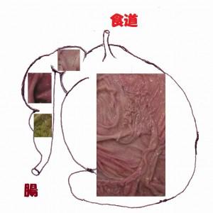 ナマケモノの胃
