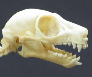 頭骨 1863