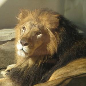 ライオン9074