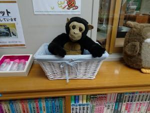 動物科学資料館 こども図書室に住んでいる チンパンジーくん